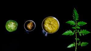 tomates vertes et feuilles de tomate : purée, sauce et concentré